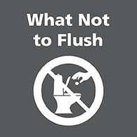 What not to flush link image